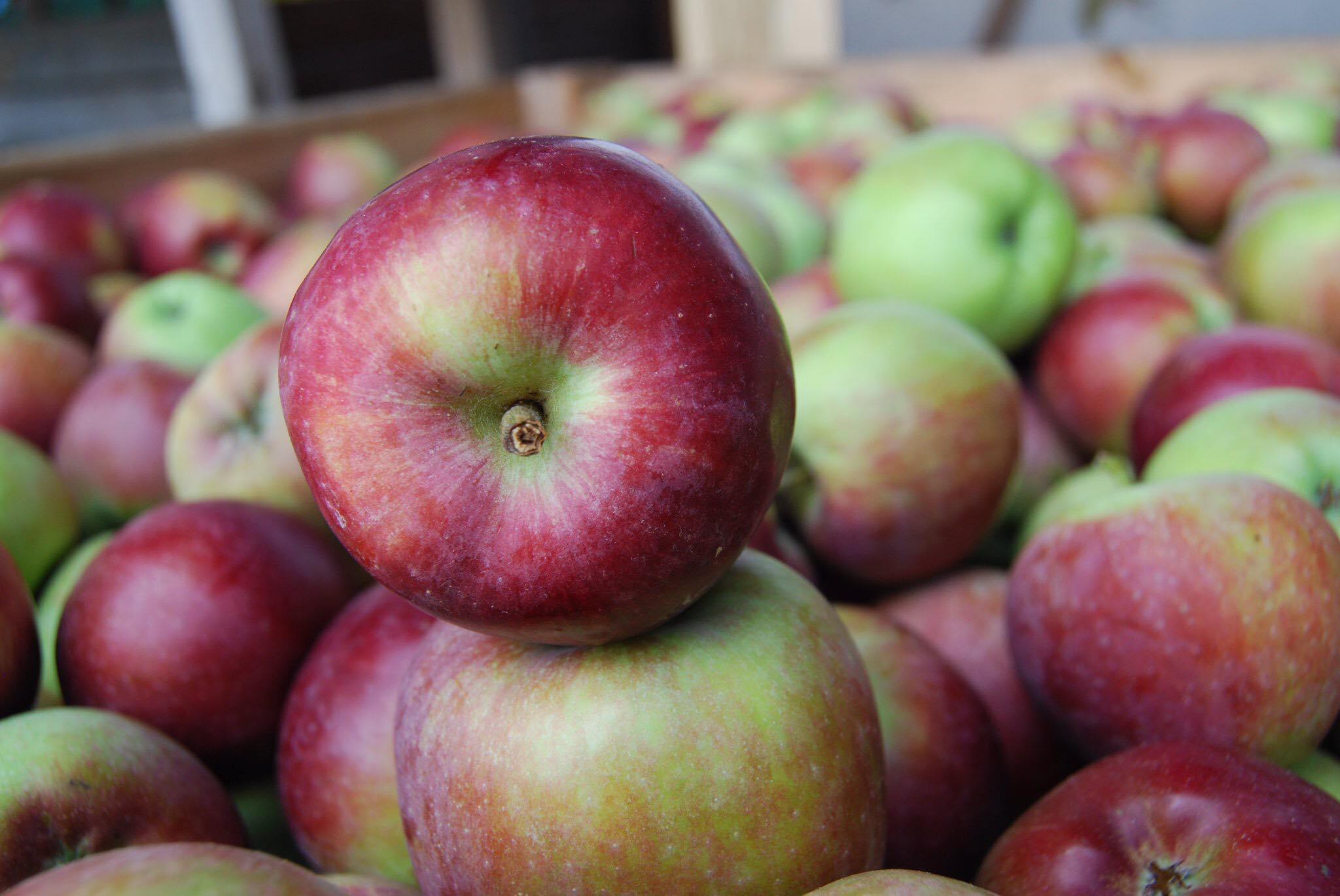 позднее яблоки картинки с названием крепко прилипает камням